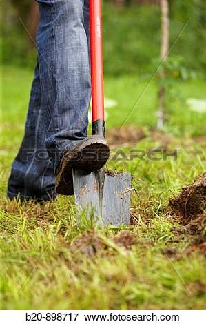 Picture of Farmer digging with spade, hand tool, farming.