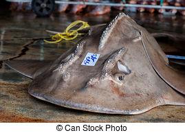 Stock Photos of bow mouth Guitar Shark on the concrete csp18691230.
