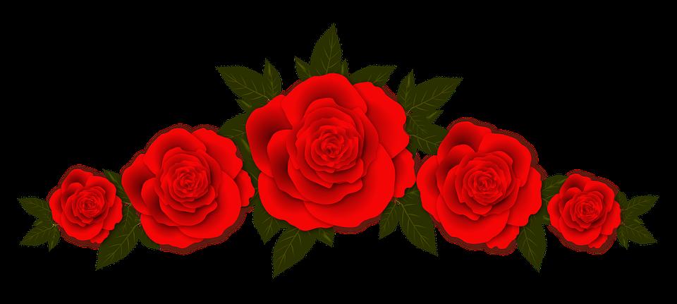 Png kırmızı güller, kırmızı gül png resimleri.