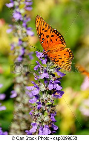 Pictures of Butterfly and Purple Flowers.