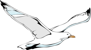 Sea gull clip art.