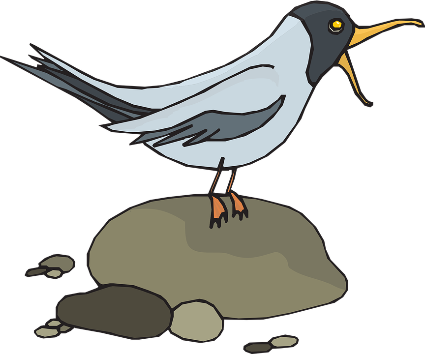 Free vector graphic: Gull, Seagull, Sea.