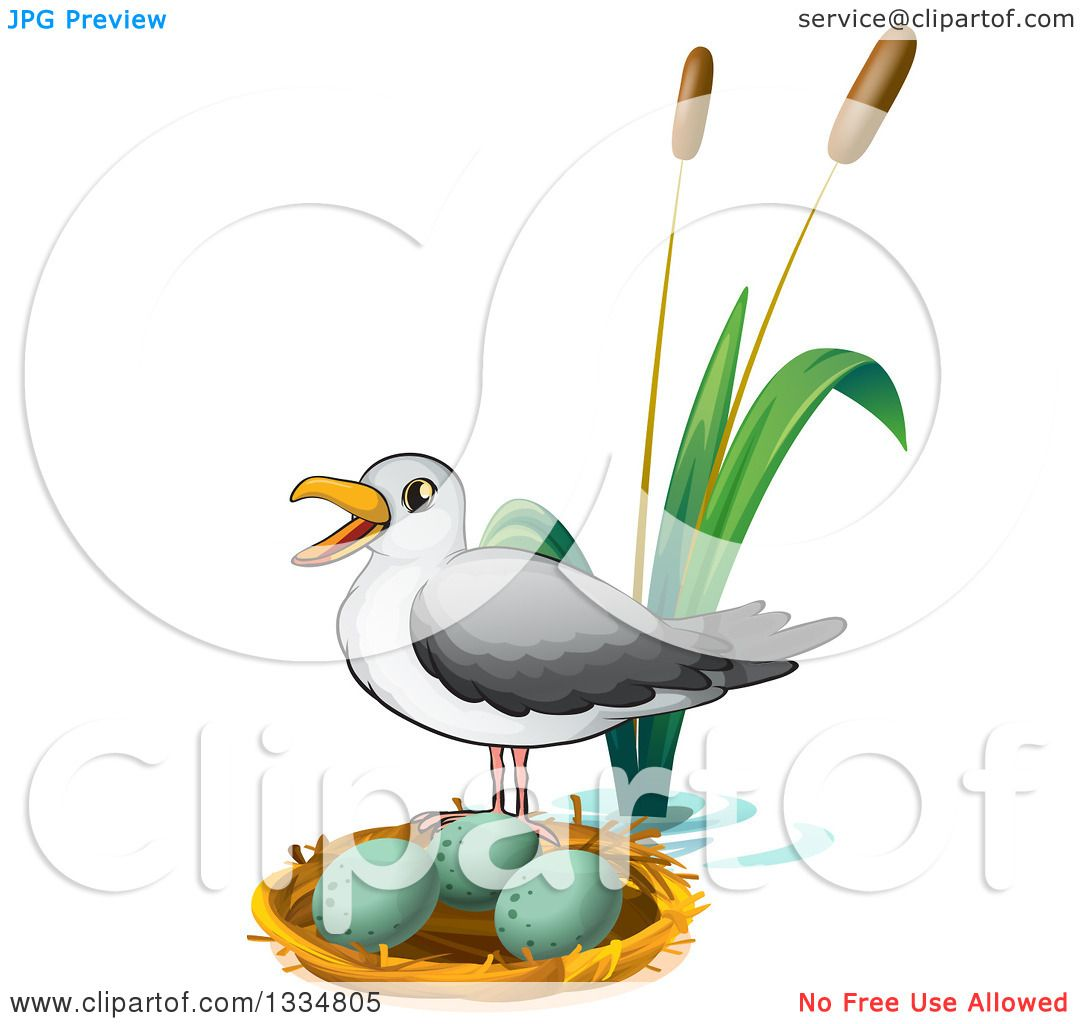 Clipart of a Seagull by a Nest with Eggs.