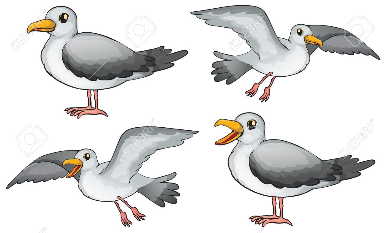 2,242 Seagull Isolated Stock Illustrations, Cliparts And Royalty.