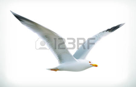 8,792 Gull Bird Stock Illustrations, Cliparts And Royalty Free.