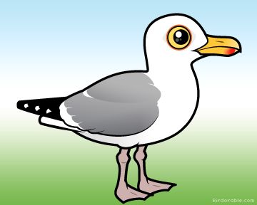 1000+ ideas about Herring Gull on Pinterest.