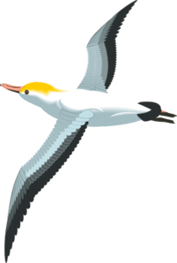 Flying Sea Gull Clip Art at Clker.com.