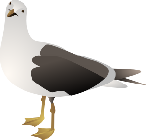 Gull Clip Art at Clker.com.