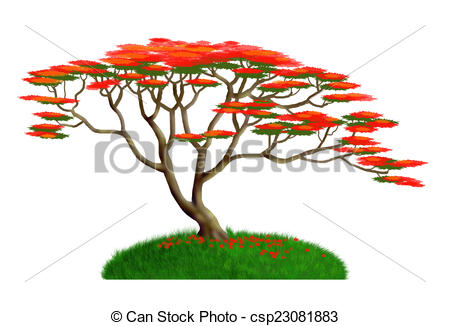 Poinciana Illustrations and Clipart. 35 Poinciana royalty free.