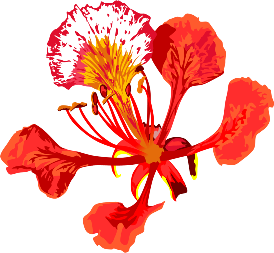 Poinciana Flower by AdamZT2 on DeviantArt.