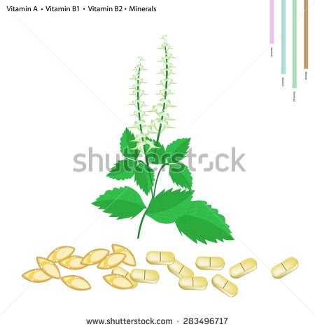 Tulsi Stock Images, Royalty.