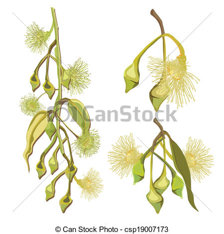 Gum tree Illustrations and Clip Art. 224 Gum tree royalty free.