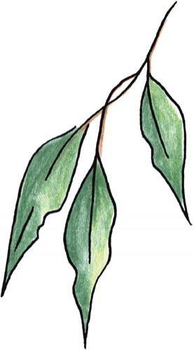Gum Leaf Template.