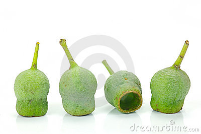 Australian Gum Nuts Stock Photography.