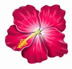 Gumamela plant clip art.