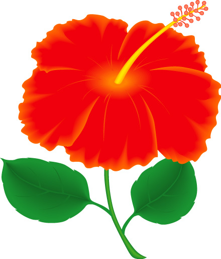Gumamela flower clipart.