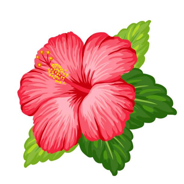 Gumamela flower clipart 1 » Clipart Station.