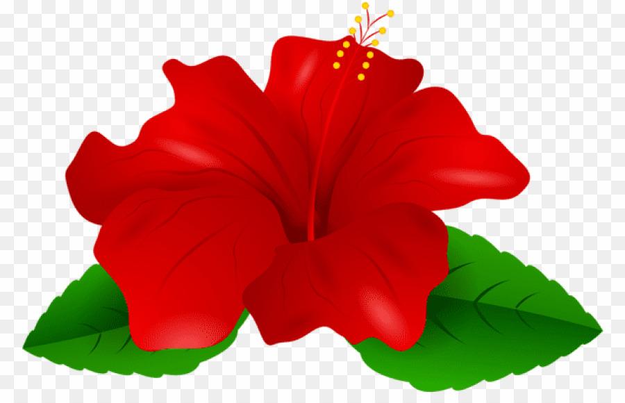 Transparent Background Gumamela Flower PNG Shoeblackplant Clipart.