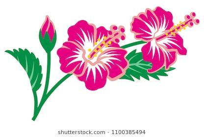Gumamela flower clipart » Clipart Station.