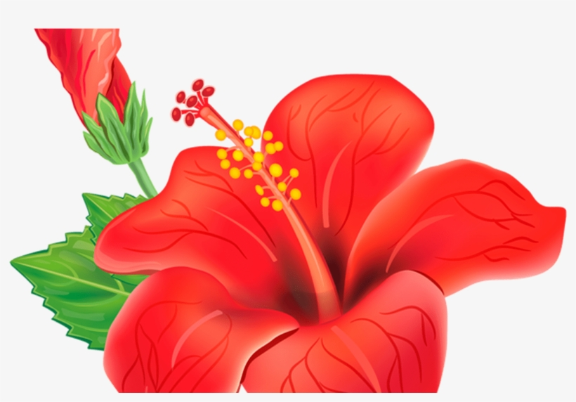 Red Exotic Flower Png Clipart Picture Moana Pinterest.
