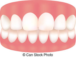 Teeth and gums clipart.