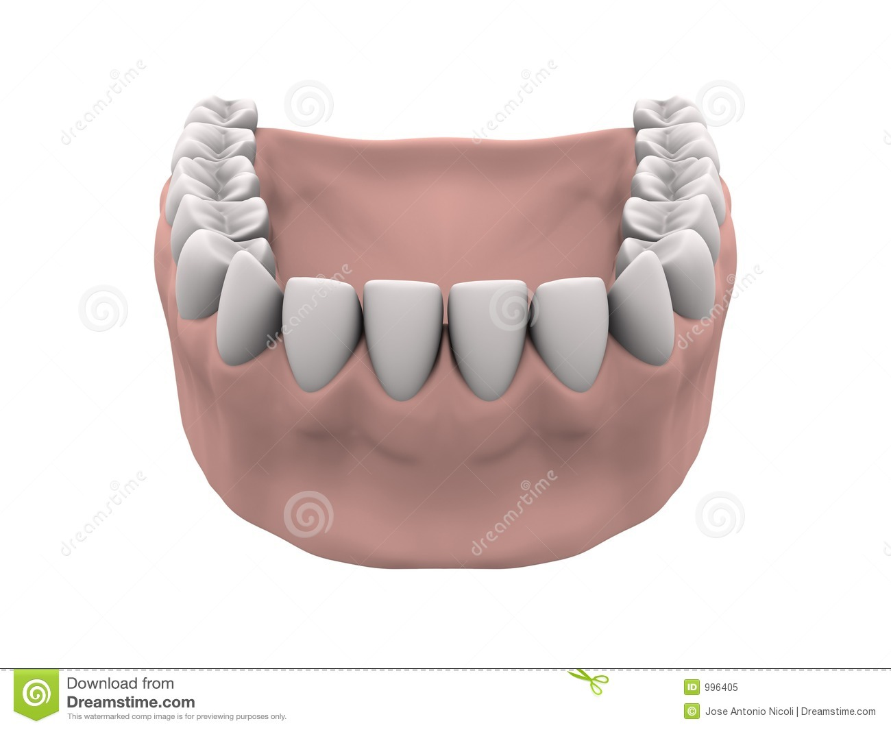 Teeth And Gums Stock Photography.