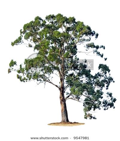 Gumtree Clipart.