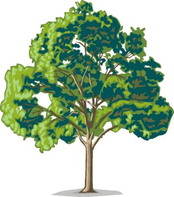 Clipart gum trees.