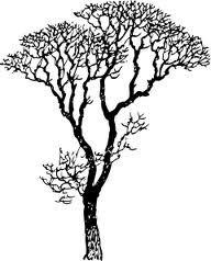 gum tree silhouette.