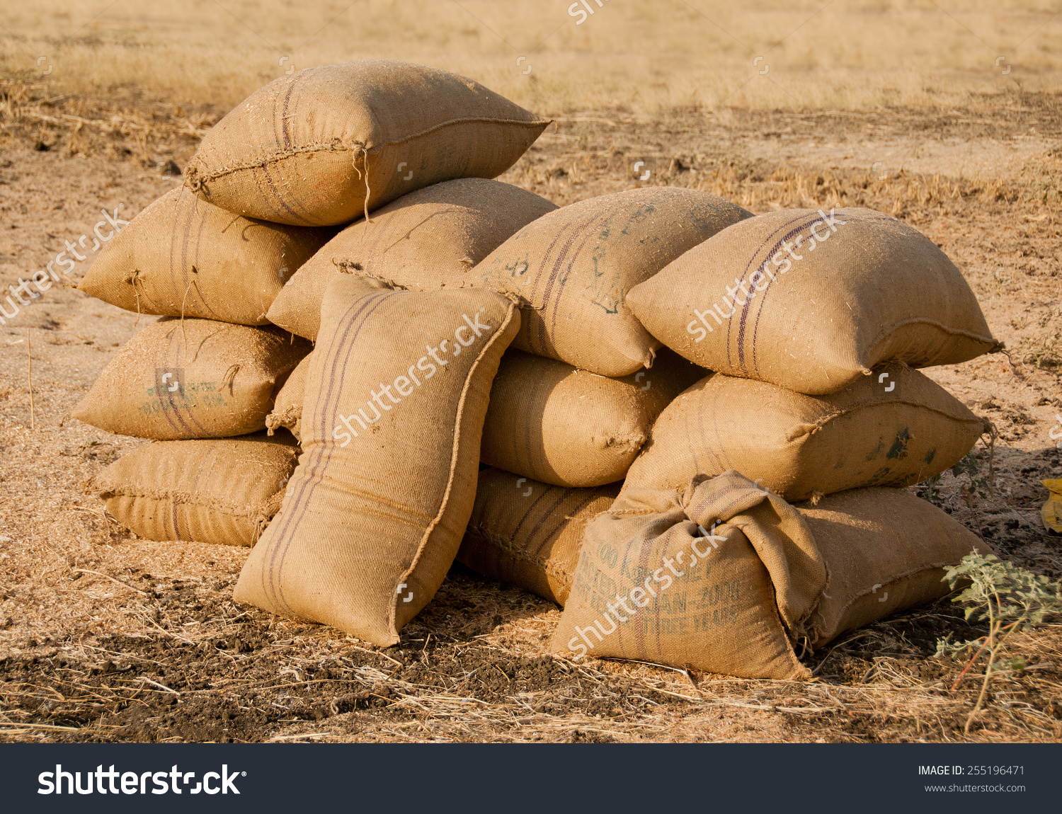 Stacked Gunny Bag Filled Soy Seeds Stock Photo 255196471.
