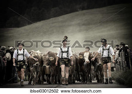 "Stock Photo of ""Shepherds with a herd of cattle during the."