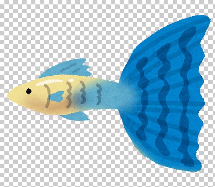 Guppy Fish ユニバーサルホーム茂原店 Pet, fish PNG clipart.
