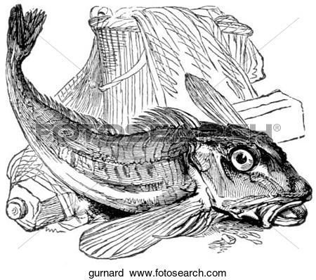 Clipart of Aquatic life.