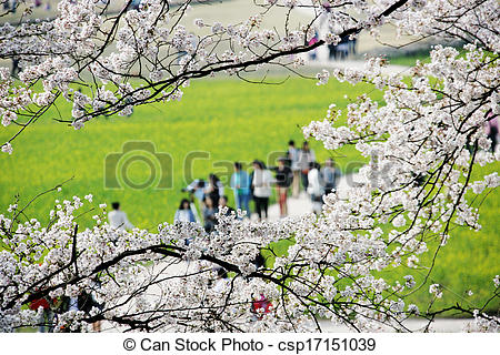 Stock Photos of Beautiful spring landscape in South Korea.