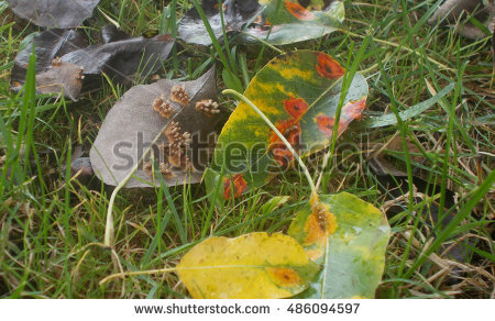 Rust Disease Plant Stock Photos, Royalty.