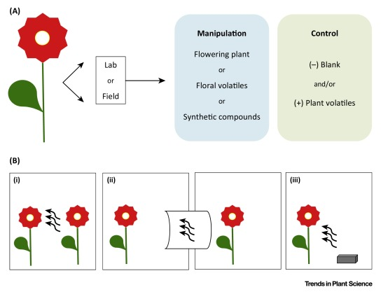 Do Plants Eavesdrop on Floral Scent Signals?: Trends in Plant Science.