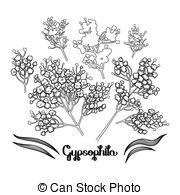 Gypsophila Clip Art Vector and Illustration. 100 Gypsophila.