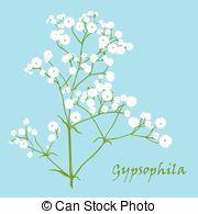 Gypsophila Illustrations and Clipart. 115 Gypsophila royalty free.