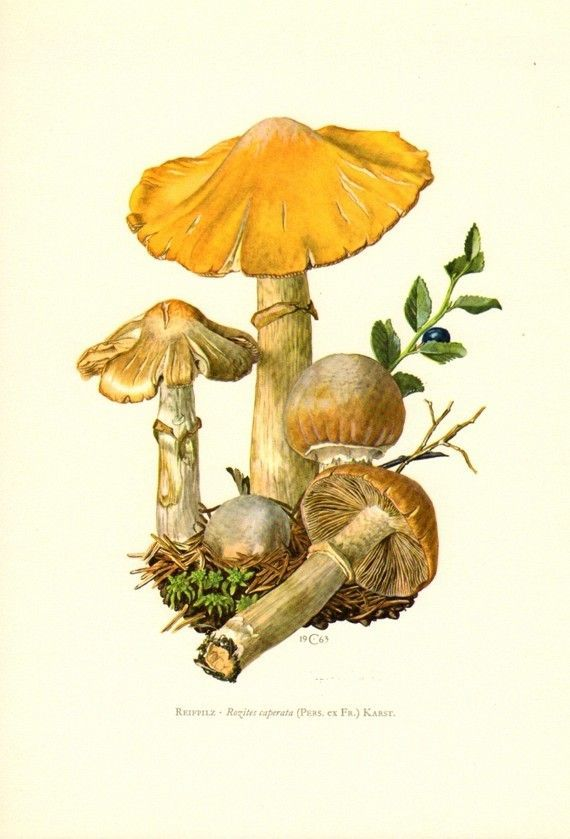 17 Best images about creare funghi Mushrooms on Pinterest.