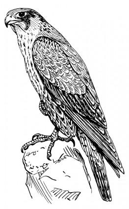 Falcon Clip Art Download.