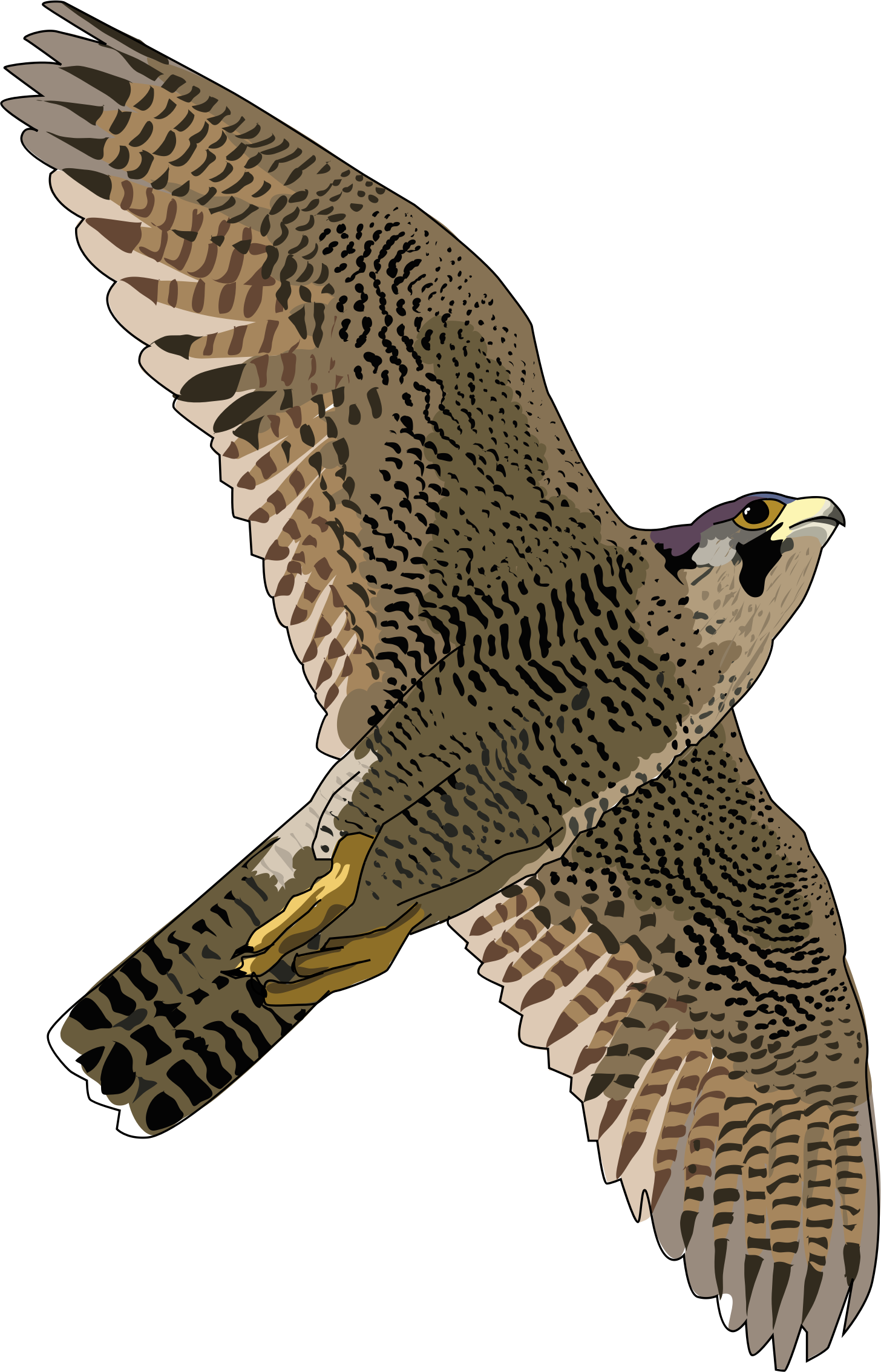 Falcon PNG Transparent Images.
