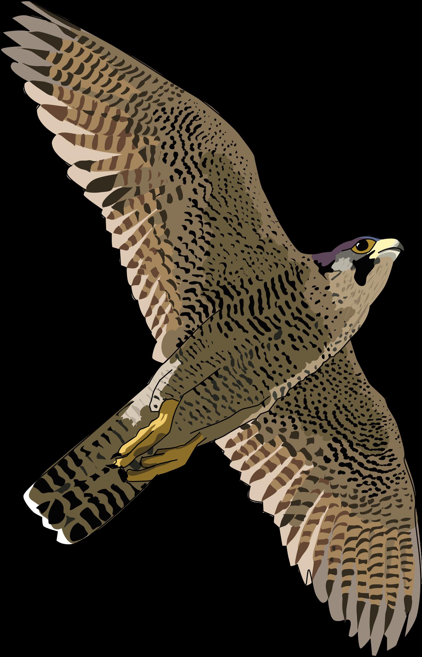 Falcon PNG Transparent Images.