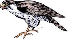 Falcon Cliparts.