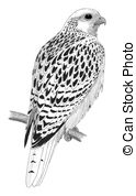 Falco Illustrations and Clip Art. 67 Falco royalty free.