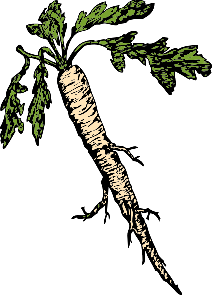 Salsify Food Plants Root clip art Free Vector / 4Vector.