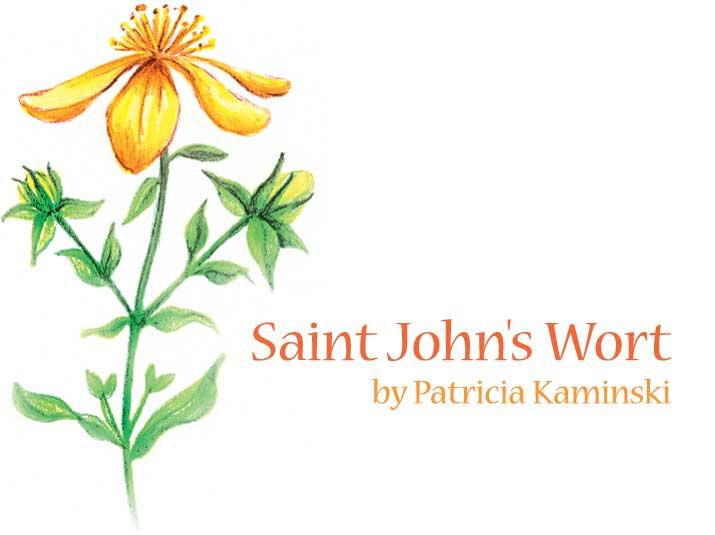 St. John's Wort.