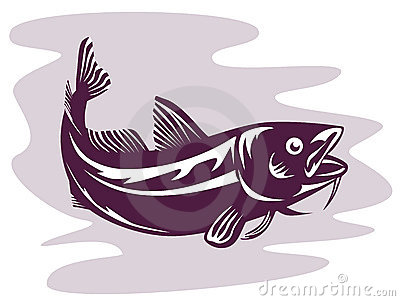 Haddock Stock Illustrations.