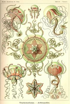 Ernst haeckel, Beautiful and Geometry on Pinterest.