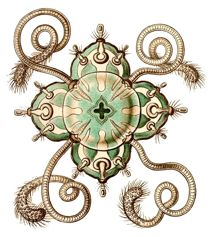 1000+ images about Prof. Ernst Haeckel 1834.