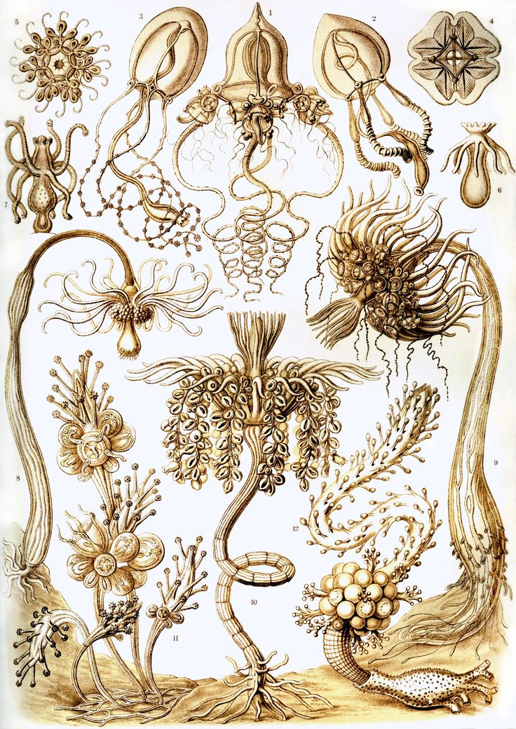 1000+ images about The Work of ERNST HAECKEL 1834.